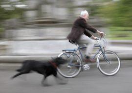 De ce câinele urmărește mașini, motociclete sau biciclete?