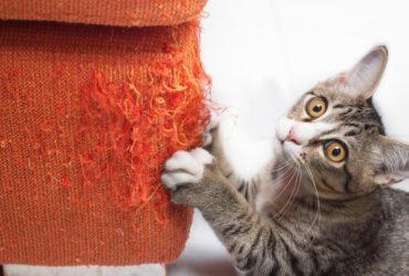 Soluții pentru pisica să nu zgârie canapeaua